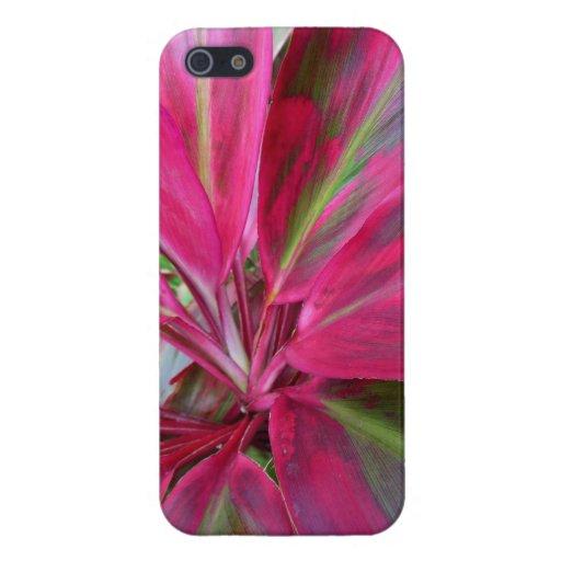 Planta hawaiana del Ti iPhone 5 Cárcasa