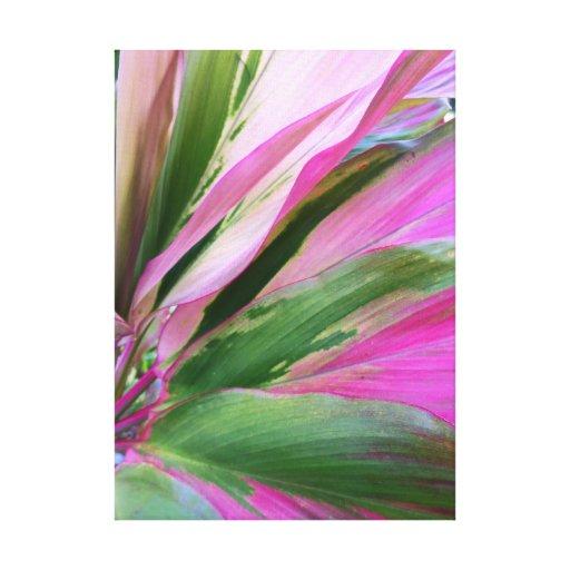 Planta hawaiana del Ti Impresiones En Lienzo Estiradas