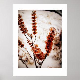 Planta helada póster
