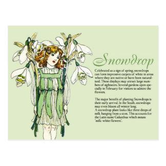 Planta Info del chica de Snowdrops del vintage del Tarjeta Postal
