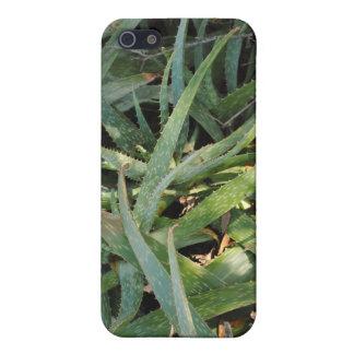 planta iphone4 sae del áloe iPhone 5 cárcasa