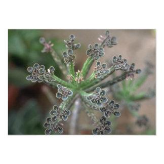 Planta Kalanchoe Anuncio Personalizado