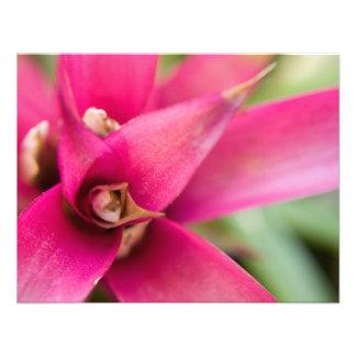 Planta llameante magenta de Bromeliad de la espada Comunicados Personalizados