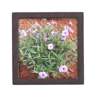 Planta mexicana de la petunia de duchas púrpuras cajas de regalo de calidad