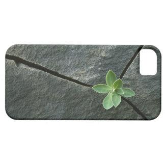 Planta que crece en Boulder agrietado Funda Para iPhone 5 Barely There