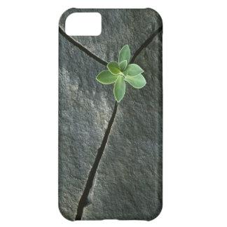 Planta que crece en Boulder agrietado Funda Para iPhone 5C