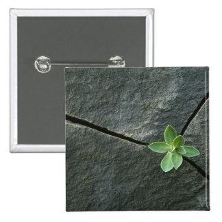 Planta que crece en Boulder agrietado Pin