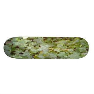 Planta que cubre la pared de piedra tablas de patinar