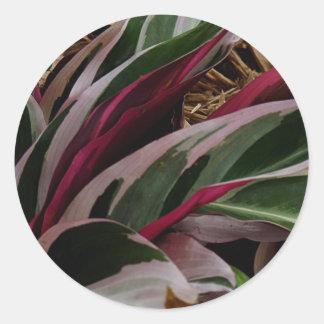 Planta rayada roja pegatina redonda