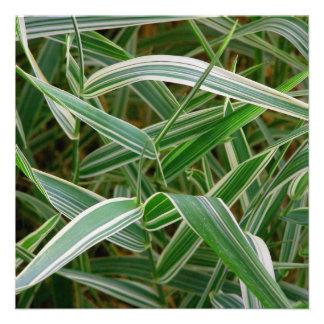 Planta rayada verde de la hierba de la araña y bla invitaciones personales
