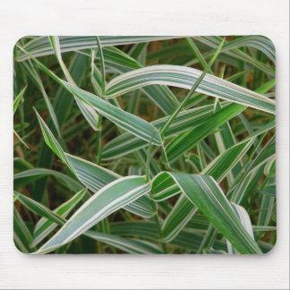 Planta rayada verde de la hierba de la araña y bla alfombrillas de ratón