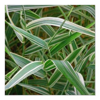 Planta rayada verde de la hierba de la araña y invitaciones personales