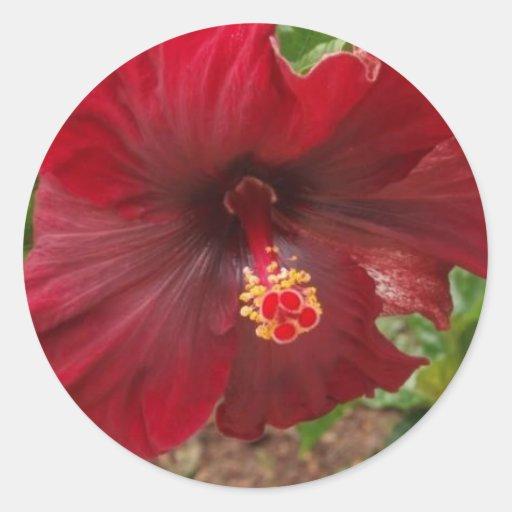 planta roja del hibisco de Hawaii Pegatina Redonda