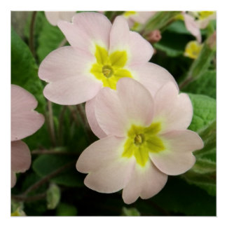 Planta salvaje rosada de la primavera