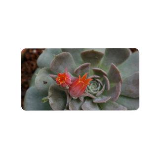 Planta suculenta con la flor anaranjada etiqueta de dirección