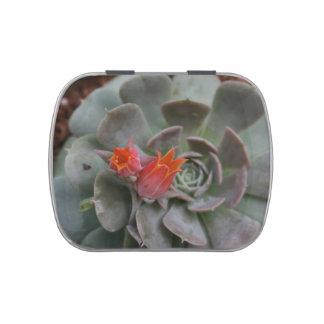 Planta suculenta con la flor anaranjada frascos de caramelos