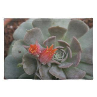 Planta suculenta con la flor anaranjada manteles individuales