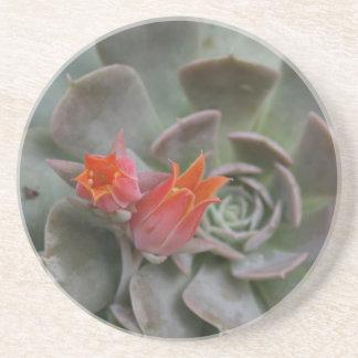 Planta suculenta con la flor anaranjada posavasos personalizados