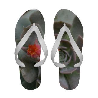 Planta suculenta con la flor anaranjada sandalias