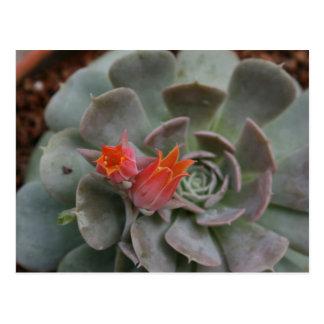 Planta suculenta con la flor anaranjada postales