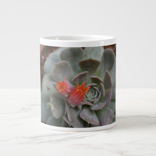 Planta suculenta con la flor anaranjada taza grande