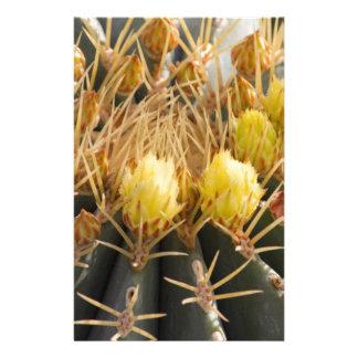 planta suculenta en el jardín  papeleria de diseño