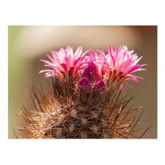 planta suculenta en el jardín postal