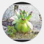 planta suculenta etiquetas redondas