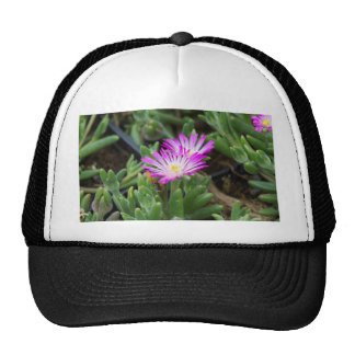 planta suculenta gorra