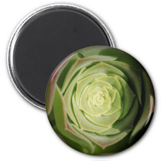 planta suculenta imán redondo 5 cm