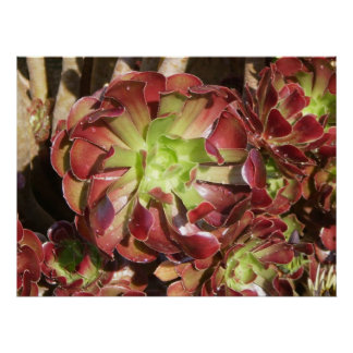 Planta suculenta poster