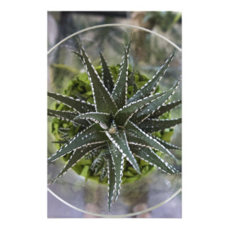 planta suculenta papeleria