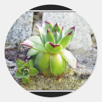 planta suculenta pegatina redonda