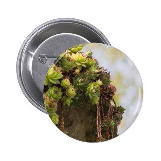planta suculenta pin