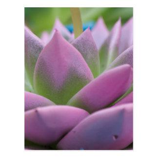 planta suculenta postales
