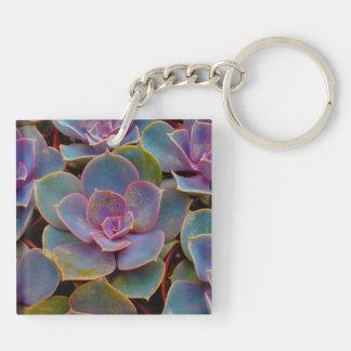 Planta suculenta púrpura del cactus del verde azul llavero cuadrado acrílico a doble cara