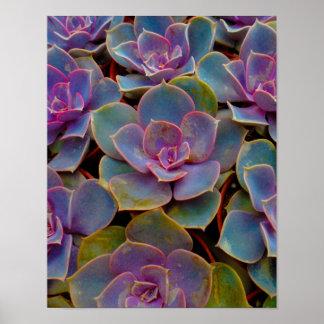 Planta suculenta púrpura del cactus del verde azul poster