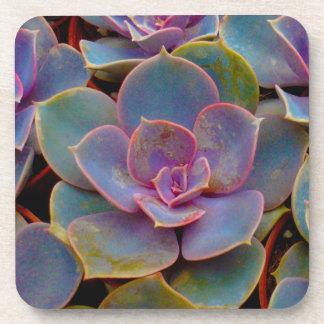 Planta suculenta púrpura del cactus del verde azul posavasos de bebida