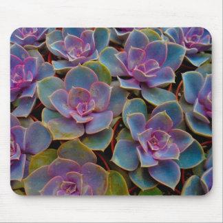Planta suculenta púrpura del cactus del verde azul alfombrilla de ratón