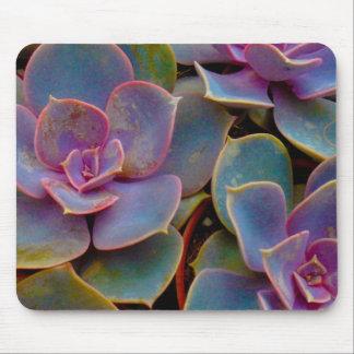 Planta suculenta púrpura del cactus del verde azul tapete de ratón