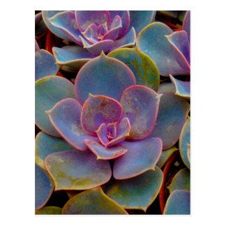 Planta suculenta púrpura del cactus del verde azul postales