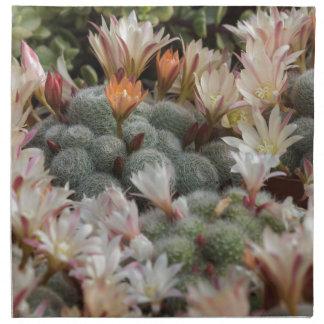 planta suculenta servilletas