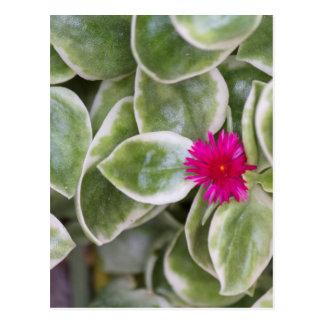 planta suculenta tarjeta postal