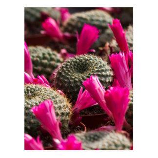 planta suculenta tarjetas postales
