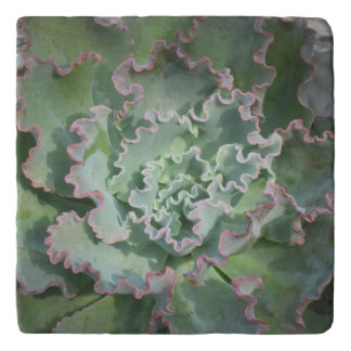Planta suculenta Trivet de Echeveria Salvamanteles