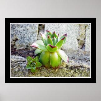 planta suculenta verde impresiones