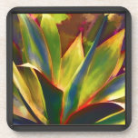 Planta tropical brillante del agavo posavaso