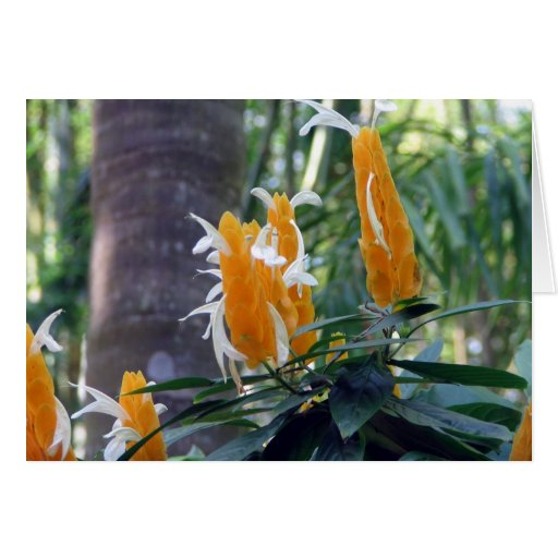 Planta tropical del camarón tarjetón