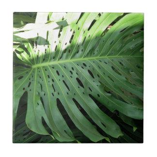 Planta tropical del oído de elefante azulejo cuadrado pequeño