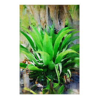 Planta tropical - jardín tropical de Fairchild Posters